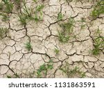 dry cracked earth with grass ...   Shutterstock . vector #1131863591