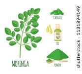 moringa set with powder  oil... | Shutterstock .eps vector #1131894149