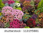 a colourful flower bed in the... | Shutterstock . vector #113195881