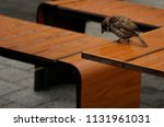 bird sits on a wooden table... | Shutterstock . vector #1131961031