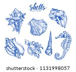 seashell  mollusk sea shell... | Shutterstock .eps vector #1131998057