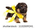 small german shepherd puppy... | Shutterstock . vector #1132009241