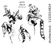 vector ink drawn botanical... | Shutterstock .eps vector #1132014824