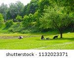 vilnius  lithuania   21 april... | Shutterstock . vector #1132023371