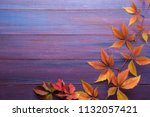 branch of colorful autumn... | Shutterstock . vector #1132057421