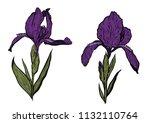 hand drawn iris set in vector... | Shutterstock .eps vector #1132110764
