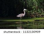 great blue heron | Shutterstock . vector #1132130909