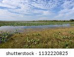 waterlilies floating on the...   Shutterstock . vector #1132220825