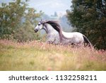 Stock photo andalusian horse running in a flowerfield 1132258211