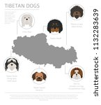 dogs by country of origin.... | Shutterstock .eps vector #1132283639