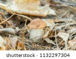 white mushroom in needles in... | Shutterstock . vector #1132297304