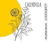 calendula vector sketch...   Shutterstock .eps vector #1132318577