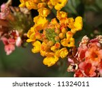 a close up image of some... | Shutterstock . vector #11324011