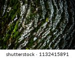 Tree Bark With Moss Background...