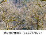 entangled twiggy forest detail...   Shutterstock . vector #1132478777