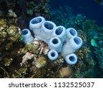 menjangan island  bali  ... | Shutterstock . vector #1132525037
