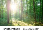 forest trees. nature green wood ... | Shutterstock . vector #1132527284