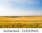 green field and beautiful sunset | Shutterstock . vector #1132529651