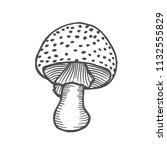 nice black and white amanita.... | Shutterstock .eps vector #1132555829