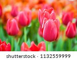 have gorgeous blooms with color ...   Shutterstock . vector #1132559999