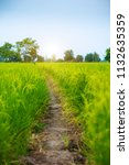 countryside scenery of rice...   Shutterstock . vector #1132635359