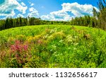 summer green forest meadow... | Shutterstock . vector #1132656617