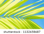 copy space tropical palm tree... | Shutterstock . vector #1132658687