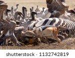 zebras migration   ... | Shutterstock . vector #1132742819