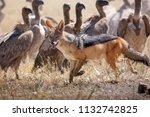 zebras migration   ... | Shutterstock . vector #1132742825