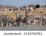 zebras migration   ... | Shutterstock . vector #1132742951