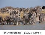 zebras migration   ... | Shutterstock . vector #1132742954