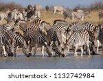 zebras migration   ... | Shutterstock . vector #1132742984