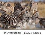 zebras migration   ... | Shutterstock . vector #1132743011