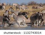 zebras migration   ... | Shutterstock . vector #1132743014