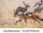 fox in makgadikgadi pans... | Shutterstock . vector #1132743131