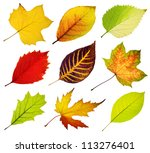 Collection Of Tree Leaves...