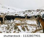 farm and a herd of bulls high... | Shutterstock . vector #1132807901