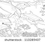 The Coloring Book   Dolphins  ...