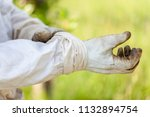 protective gloves for... | Shutterstock . vector #1132894754