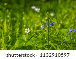 small blue and whilte flowers... | Shutterstock . vector #1132910597