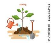sapling process flat vector... | Shutterstock .eps vector #1132922411