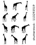 Set Of Giraffe Vector