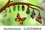 science butterfly life cycle... | Shutterstock .eps vector #1132948064
