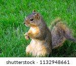 cute furry squirrel... | Shutterstock . vector #1132948661