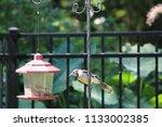 blue jay bird songbird flying... | Shutterstock . vector #1133002385