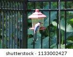 blue jay bird songbird flying... | Shutterstock . vector #1133002427
