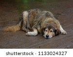 lazy dog sleeping | Shutterstock . vector #1133024327