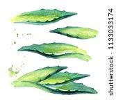 agave plant leaves set. hand... | Shutterstock . vector #1133033174