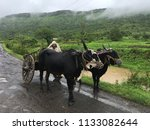 Small photo of Maharashtra, India - July 2018, Unidentified Indian farmer riding bullock cart, rural village with beautiful mountains cover by clouds.