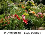 lilies in a colorful garden | Shutterstock . vector #1133105897